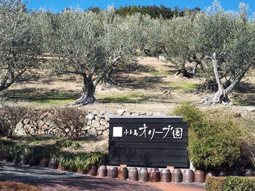 小豆島おすすめポイント「小豆島オリーブ公園」と「小豆島オリーブ園」