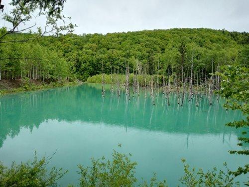 北海道美瑛の青い池は近くに行ったのなら寄ってみよう